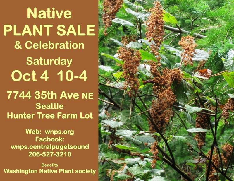 Native Plant Sale on Saturday