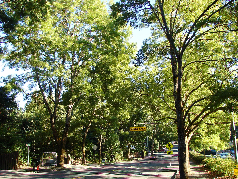 Wedgwood's Street Trees